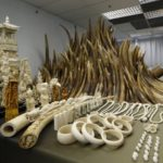 Chinese Ivory Queen Sentenced To 15 Years in Jail In Tanzania